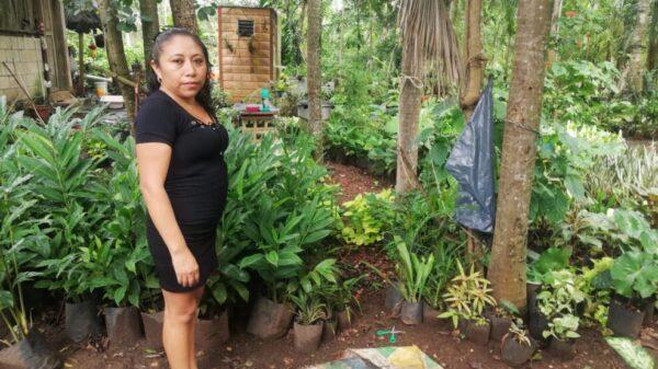 Resienten pérdidas los viveristas del sur de Lázaro Cárdenas.
