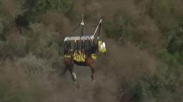 El impresionante rescate de un caballo que quedó atascado en una colina en el sendero, se populariza