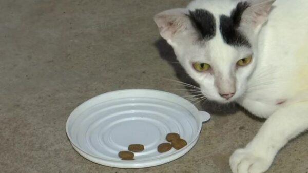 Las mascotas no solo se convierten en parte de la familia, también pueden arriesgar la vida por sus humanos y este es el caso de un gatito de la India