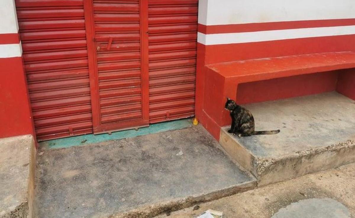 El video de un gatito maullado en la tienda de su humano se viraliza en redes sociales, ya que el felino desconoce que murió