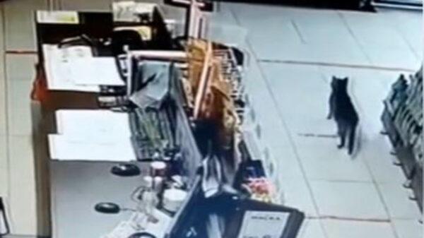 En una tienda de Siberia desplegaban operativos de vigilancia debido a que las alarmas se encendían , pero no daban con el intruso