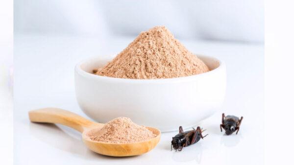 Buscan combatir el exceso de azúcar y grasa en la sangre con harina a base de insectos