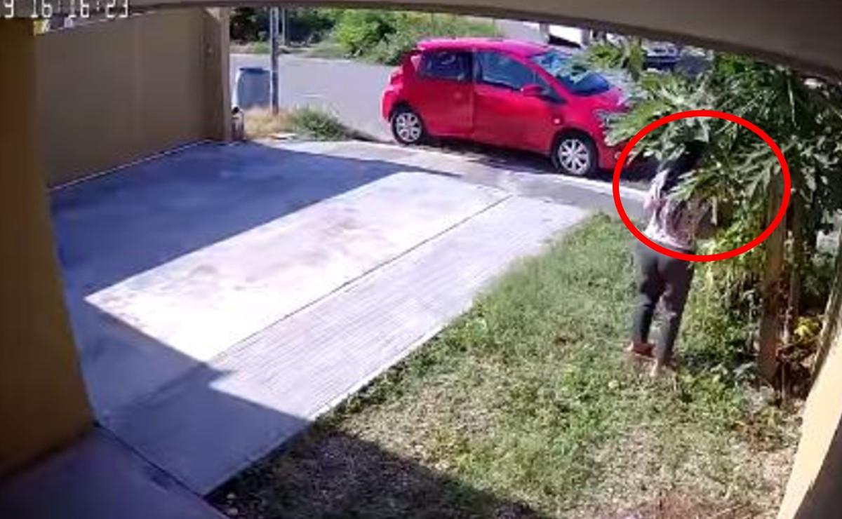 """""""Lady papaya"""", captan a mujer robando frutos en un domicilio de Mérida"""