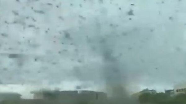 Las impresionantes imágenes de miles de mosquitos que formaron un tornado han causado asombro entre los usuarios de las redes sociales