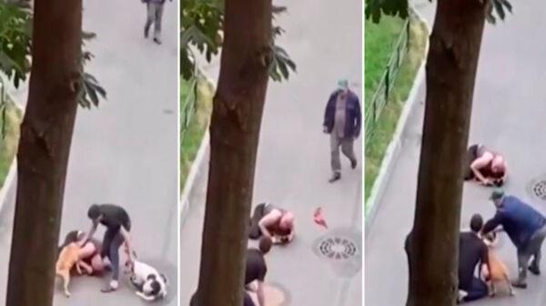 Un hombre puso en riesgo su vida para proteger a su peludo quien fue atacado por dos perros, mientras paseaban por un parque
