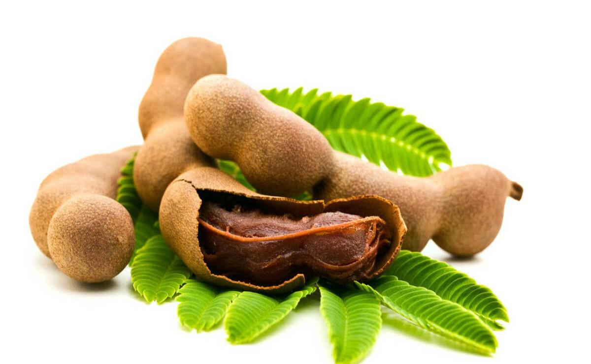 Investigadores de la UNAM desarrollan materiales a partir de semillas de tamarindo, para generar envases biodegradables
