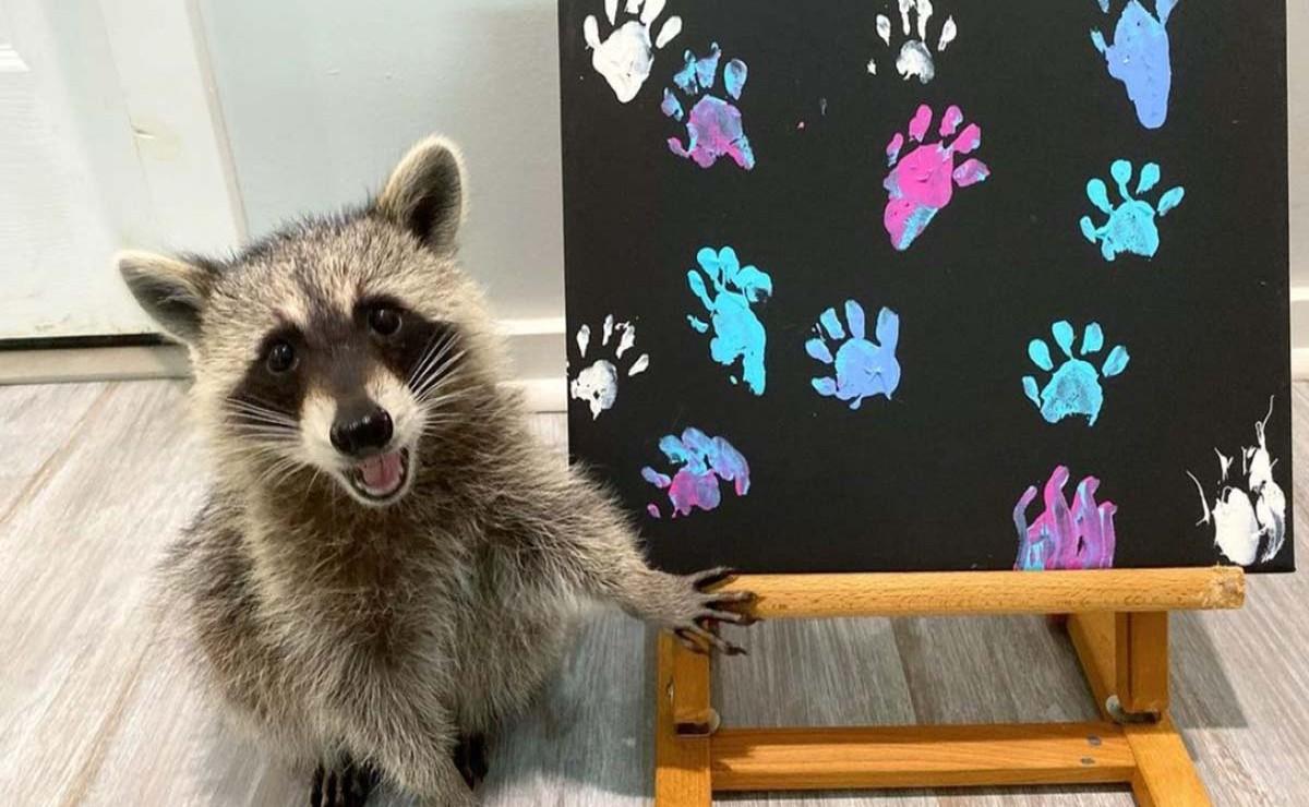 Sin duda los grandes protagonistas de las redes sociales son las mascotas y este es el caso de Tito, Piper y Cheeto, tres mapaches que la rompen en Internet
