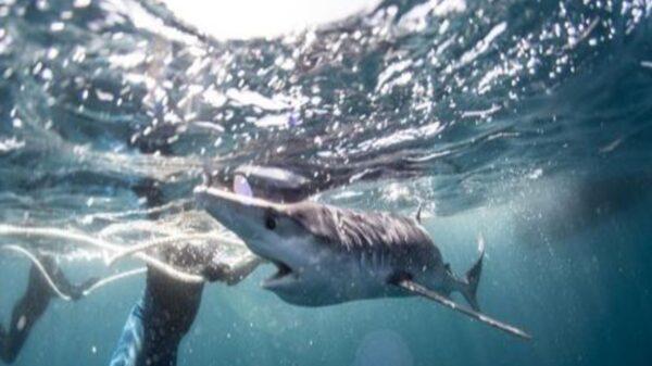 Un entusiasta fotógrafo de la vida silvestre que practica buceo en las costas de Inglaterra compartió impactantes fotos de una experiencia única
