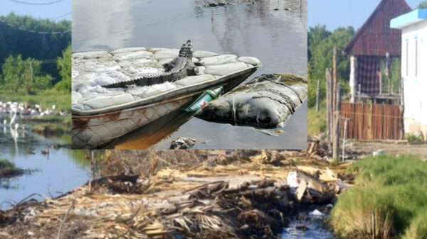 Denuncian brutal depredación de humedales en Holbox