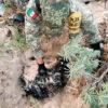 Ejército Mexicano asegura cargamento de droga en playas de Cozumel