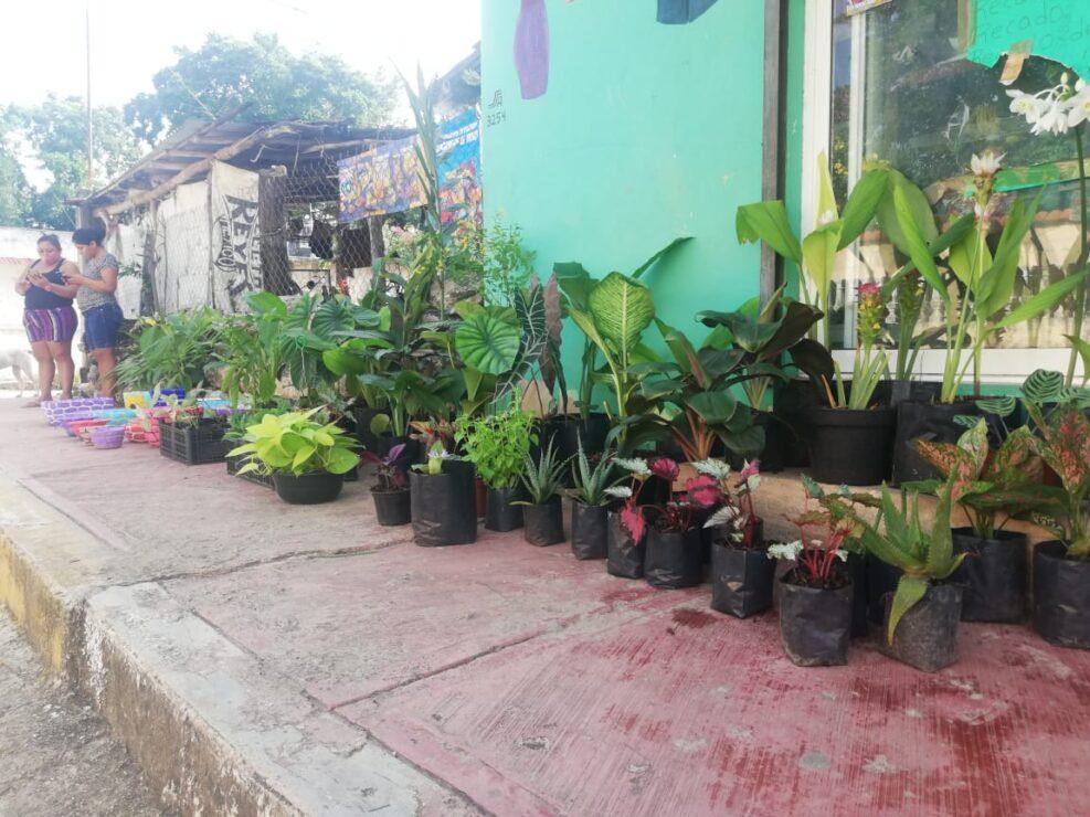 Buscan en Kantunilkín mercado para plantas de ornato.