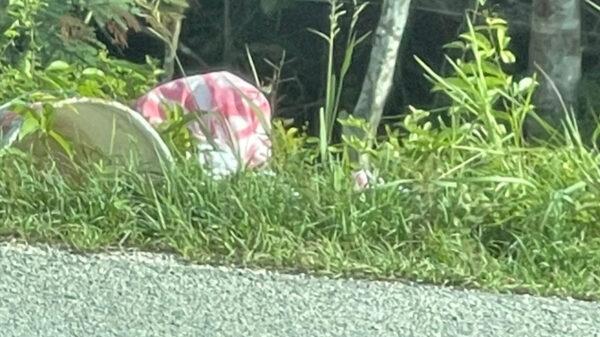 Encuentran cadáver desmembrado en tramo carretero de Tulum