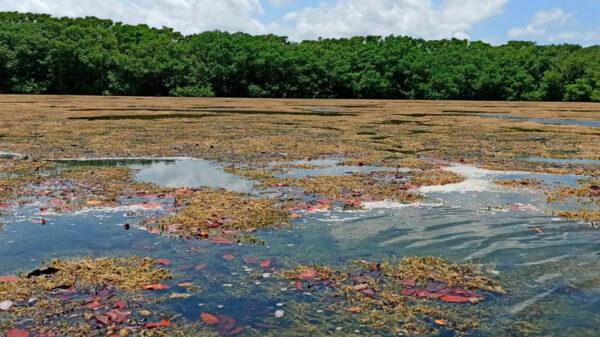 Quintana Roo actualiza ordenamientos ecológicos para proteger su riqueza natural